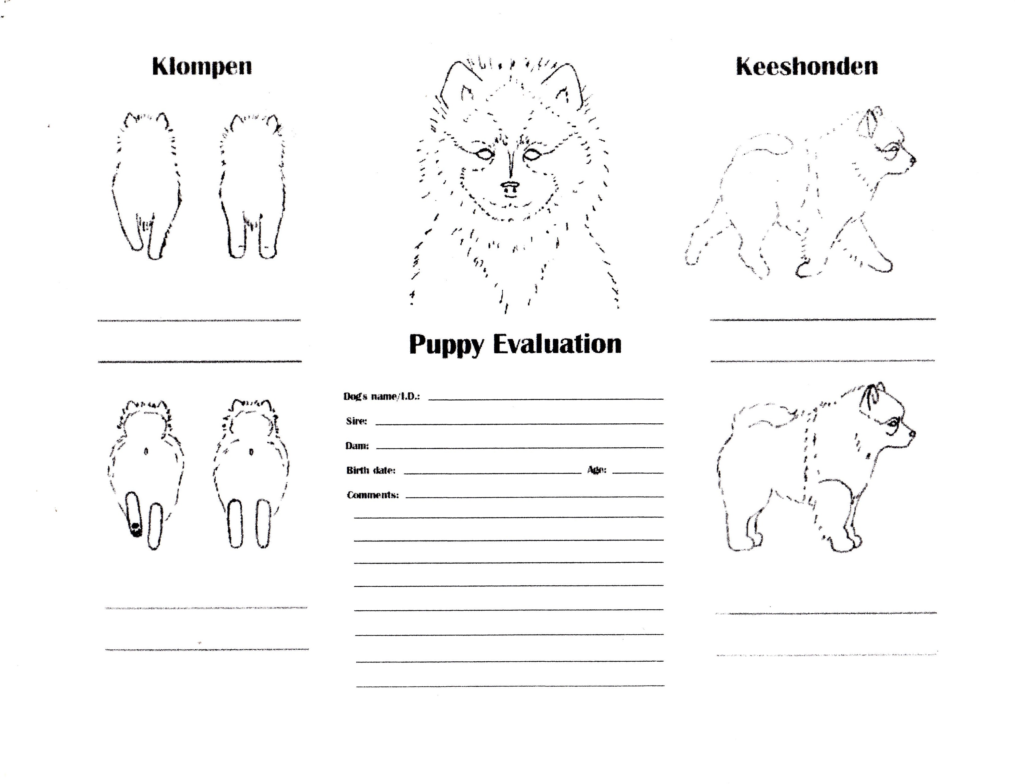Puppy Evaluation page 1